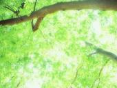 ◆所沢 東所沢 新所沢 航空公園 清瀬 久留米 村山 金・プラチナ・ブランドバック・金券・買取・ドライブスルーの買取・お待たせずラクラク・20時迄営業!◆